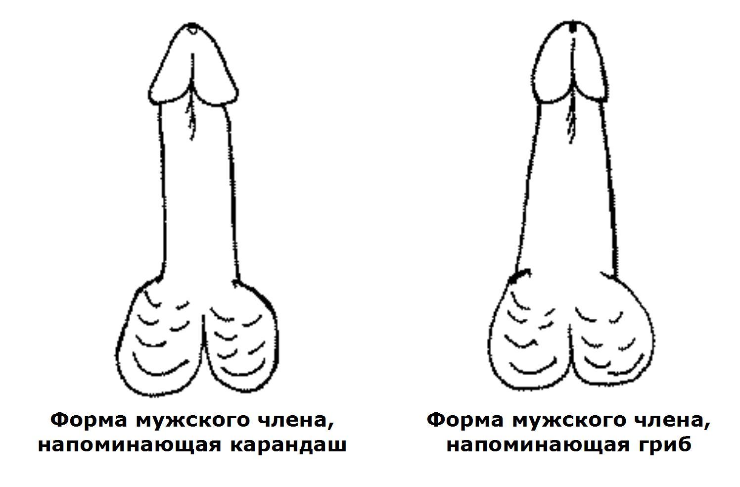 средний размер мужского члена Коммунар